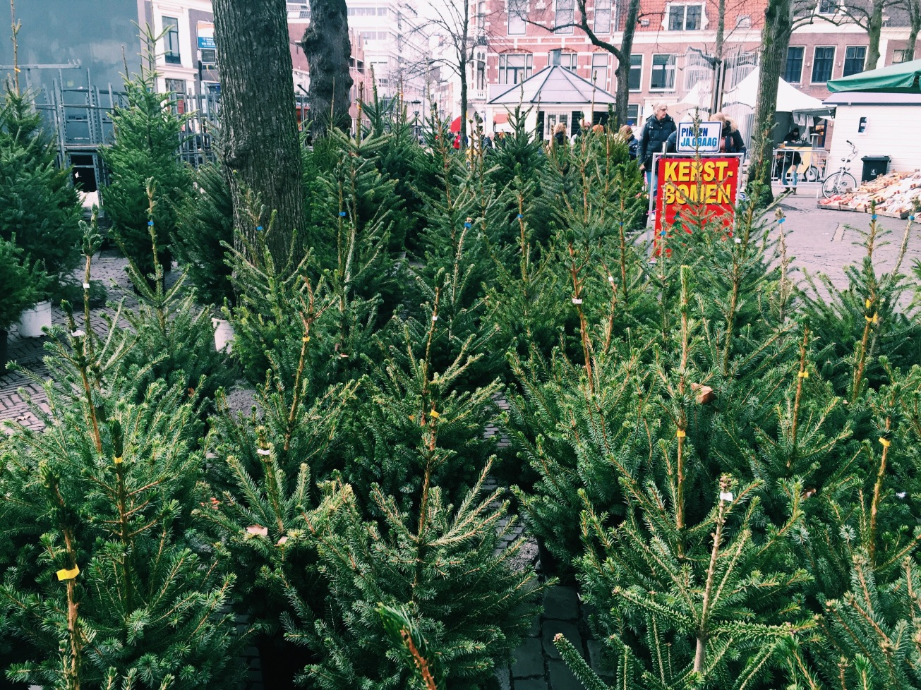 🌲will be🎄